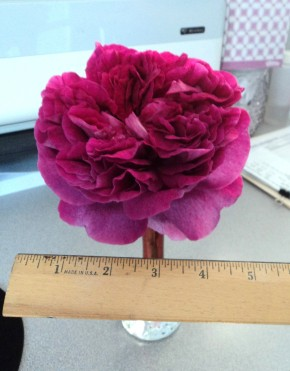 A Rose Beyond All Measure – AutismSings