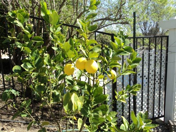 life lemons laughter response