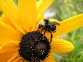 BE the Flower; Attract theBEES