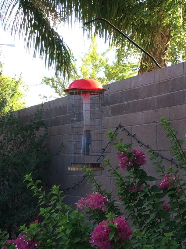 bird feeder in garden, bullying